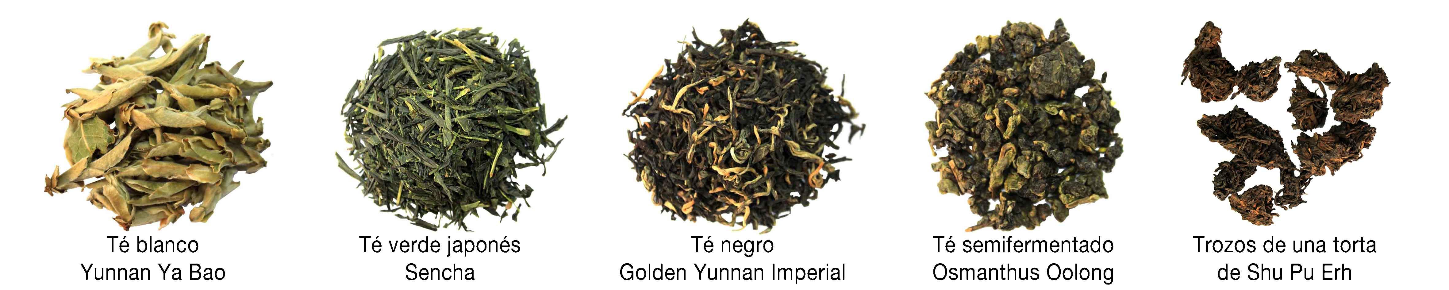 Variedades de te - Las variedades del té