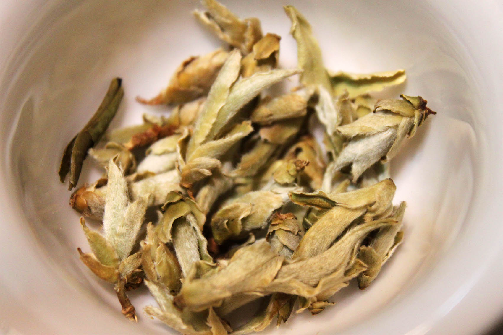 Té blanco Yunnan Ya Bao, variedades del té, tea varieties, types of tea,